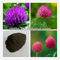 Natural Red Clover Extract 8%~40%Isoflavones