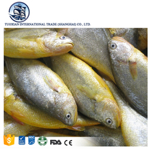 Bqf frozen yellow croaker whole round fish farming ice fresh seafood