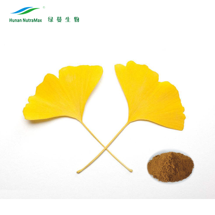 100% herbal Ginko flavones Terpenlactone Ginkgo biloba leaves Extract