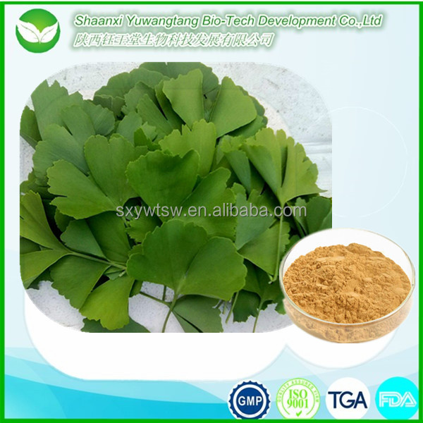 Supply from alibaba express ginkgo extract in treatment of diabetes with reasonable price