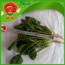 Best french clock spinach for Dubai market