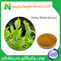 100% Natural Yerba Mate Extract, High quality Yerba Mate Extract powder/25% polyphenol