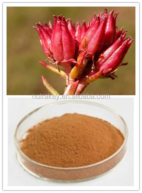 Herbal Rhodiola Rosea Root Extract Powder,ISO Product Rhodiola Rosea Powder Extract