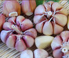 /product-detail/farm-natural-garlic-price-red-garlic-export-60662265326.html