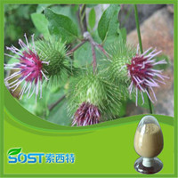Natural and organic burdock oil