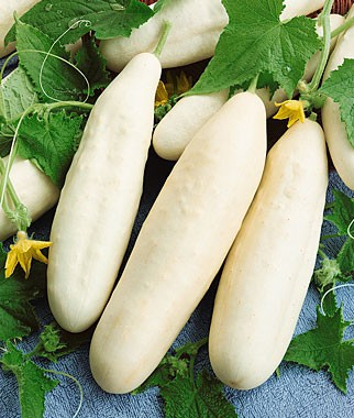 Cucumber White Seeds