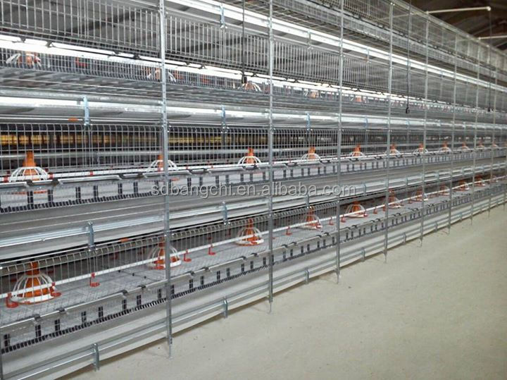 Competitive Price Automatic Poultry Broiler Cage System for Chicken House