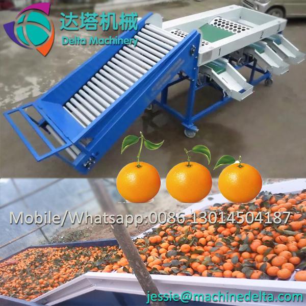 Industrial fruit and vegetable sorting machine / tomato sorter / tomato sorting machine