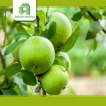 Cheap qinguan apples types of green apples for wholesales