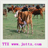 enzyme supplement cattle feed use enzyme phytase