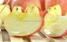 High quality new season fresh fuji apple with bargain price