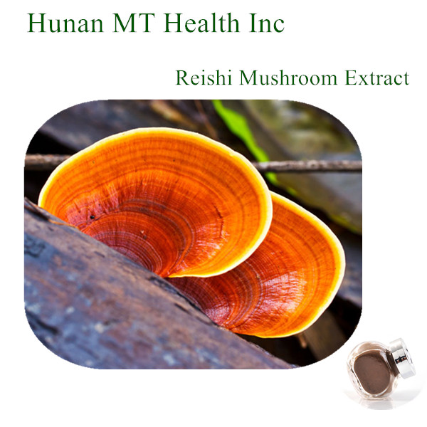 High quality 30% Polysaccharides red reishi mushroom extract