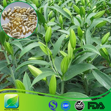 Functional Food Ingredients,both food and food and medicinelilium brownii Extract