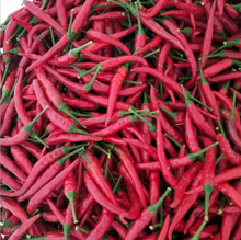 Chinese fresh small spicy red chilli with stem