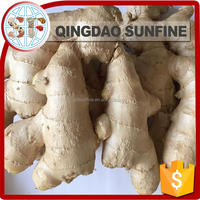 Black chinese mature fresh ginger price