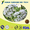 Kosher certified Valerian Extract Powder / Valeriana officinalis L. / 0.8% Valeric Acid