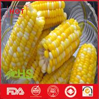 Frozen organic sweet corn from China
