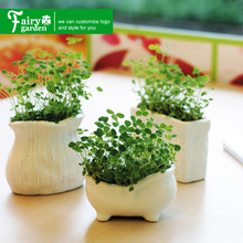 Best selling white ceramic indoor mini square succulents flower plant pots for sale