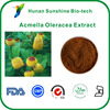 Acmella oleracea L. spilanthes extract Powder benefits for Cosmetic Raw Material