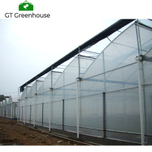 Multi Span Vegetable Used Agriculture Greenhouse