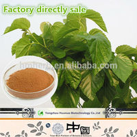 HOT SALE cheap price natural organic DNJ of Mulberry Leaf Extract