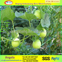 Tomato Supporting netting / plastic plant climbing net