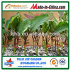 4-8mm horticulture Expanded perlite mycorrhiza