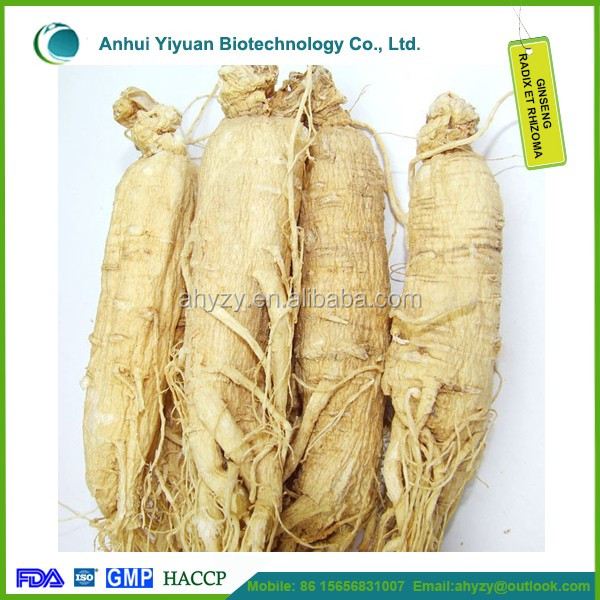 High quality 100% Pure Ginseng, Top Grade Panax Ginseng and Ginseng radix et rhizomaI in Latin