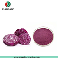 Factory supply 100% Natural Purple Cabbage Extract powder