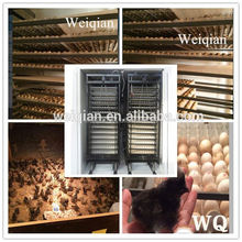 WQ-22528 largest chicken incubator producers