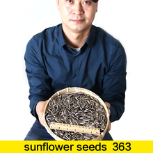 Wholesale sunflower seedS 363 WITH CHEAP PRICE