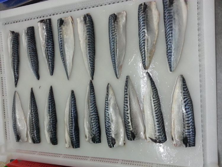 Frozen Seafood of Atlantic Mackerel Scomber Scombrus Fillets Made in China
