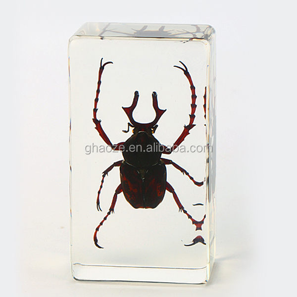 Clear Resin Paperweight Insects In Resin Creative Promotional Gifts Factory