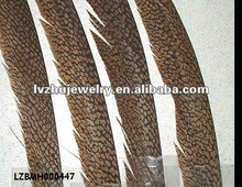 natural golden pheasant tails LZBMH000447