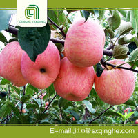chinese best fuji apple price