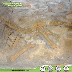 Excavation Dinosaur Skeleton Fossil Replicas