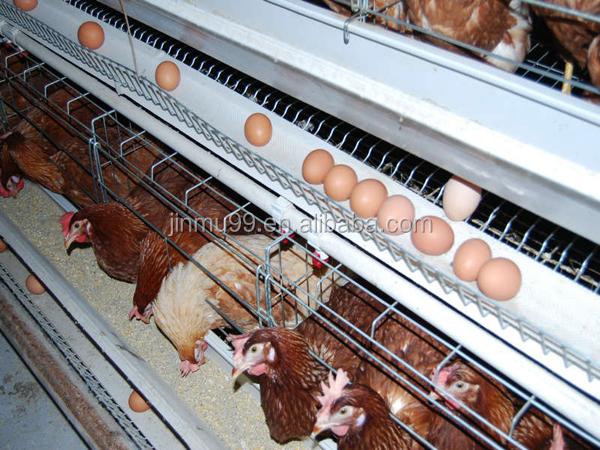 Poultry farm business plan ppt