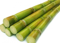 Fresh Sugarcane stick for Juice