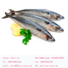70-80pcs/15kg Whole Round Seafood North Pacific Frozen Mackerel Fish