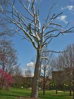 Large stainless steel tree sculpture for outdoor garden art decor