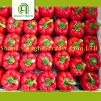 New crop fresh big red capsicum for sale