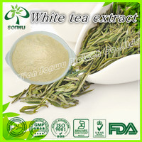 Supply Pure White Tea Extract with Polyphenols