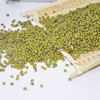 High quality green mung bean