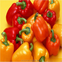New crop specifications sweet pepper