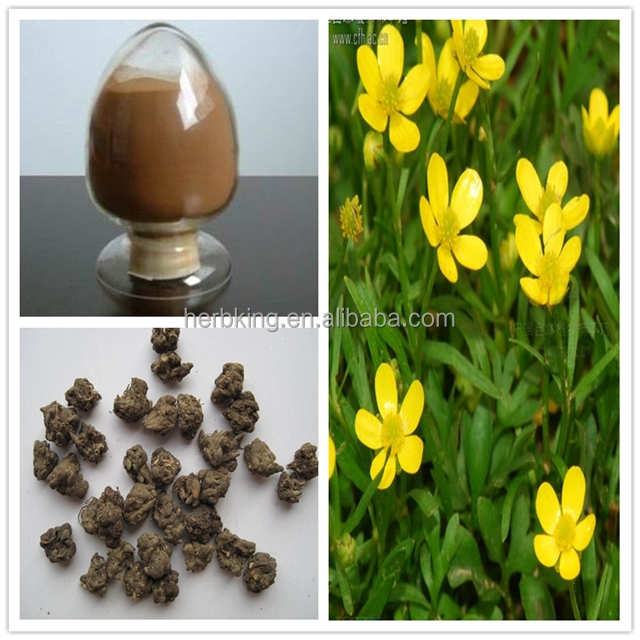 Natural Cat's Claw Extract/Ranunculus ternatus Thunb Alkaloids 2%