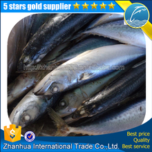 Fish Pacific Mackeral Frozen Mackerel Prices