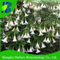 High budding rate datura seeds for planting