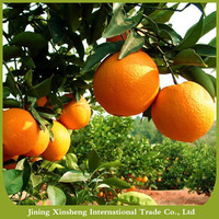 Chinese fresh sweet navel orange