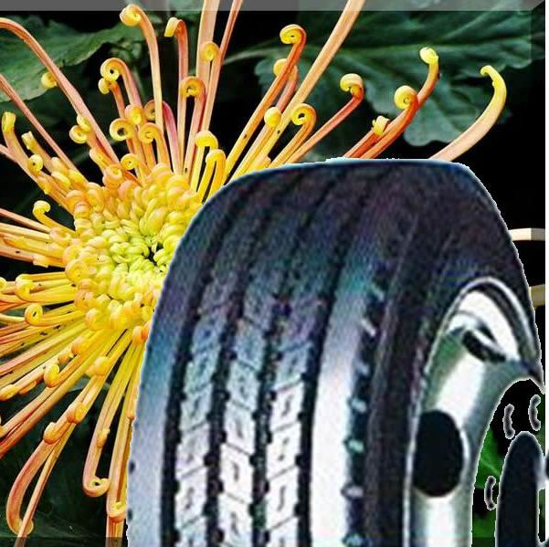Best chinese band heavy dump truck tire for sale with low price