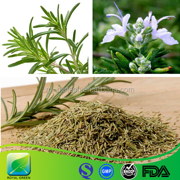 Organic dried plant extract Rosemary leaves powder Carnosic acid 5%